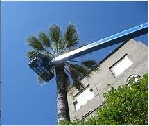 Palm-Tree-Removal-Adelaide